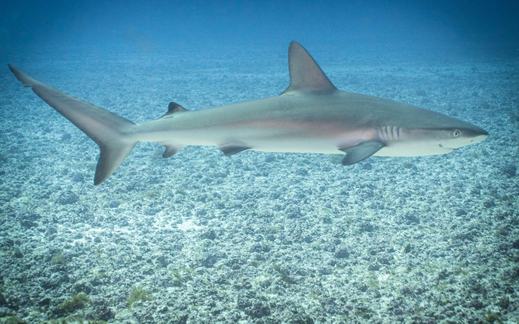 22. Tubarão 2 FN